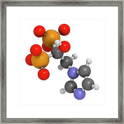 Zoledronic Acid Osteoporosis Drug Framed Print