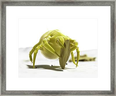 Dust Mite Framed Print by Sciepro/science Photo Library