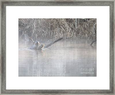 Northern River Otter Framed Print by Jack R Brock