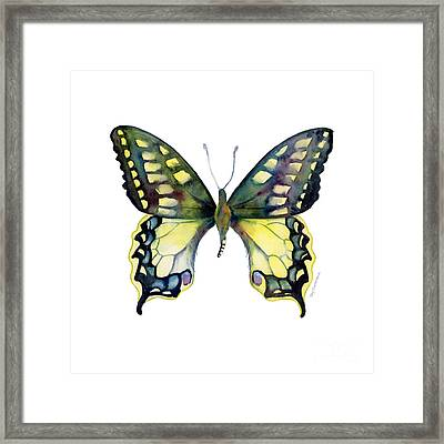 20 Old World Swallowtail Butterfly Framed Print