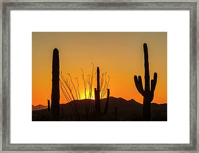 Usa, Arizona, Saguaro National Park Framed Print by Jaynes Gallery