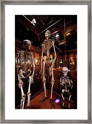 2000s Three Human Skeletons Displayed Framed Print
