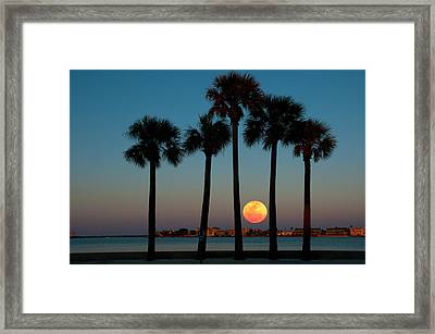 2011 Supermoon Framed Print by Carolyn Dalessandro