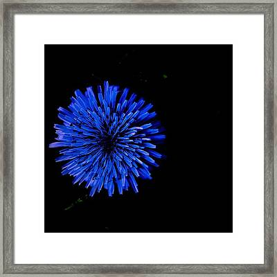 Illumination Flower Framed Print