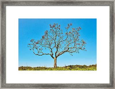 20150217115901fla24142c1p Framed Print by Fernando Lopez Arbarello