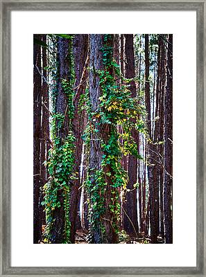 20150218112550fla24186c1p Framed Print by Fernando Lopez Arbarello