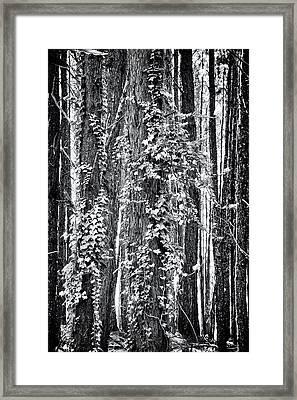20150218112550fla24186c1p_mono Framed Print by Fernando Lopez Arbarello