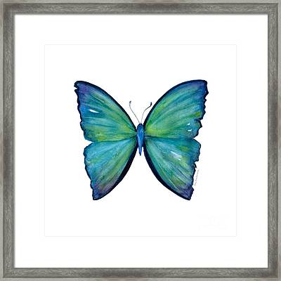 21 Blue Aega Butterfly Framed Print