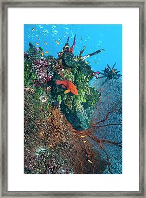 Coral Reef Framed Print by Georgette Douwma