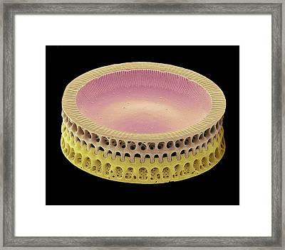 Diatom Framed Print