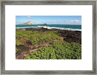 Hawaii Framed Print by Sergi Reboredo