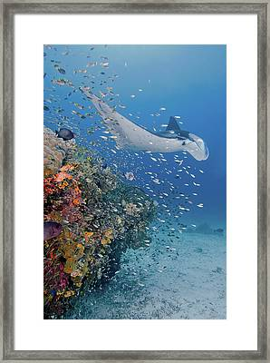 Indonesia, Papua, Raja Ampat Framed Print by Jaynes Gallery