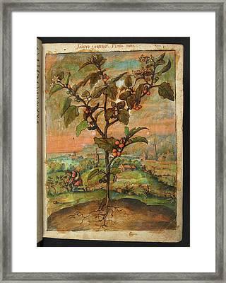 Medicinal Plant Framed Print