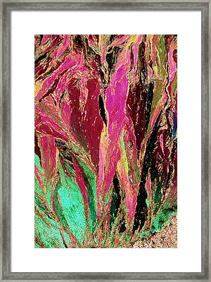 Plm Of Crystals Of Testosterone Framed Print by Sidney Moulds/science Photo Library
