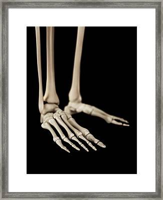 Human Foot Bones Framed Print by Sebastian Kaulitzki