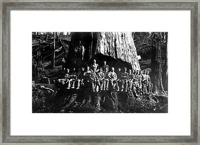 22 Loggers In Redwood Undercut -- 1884 Framed Print