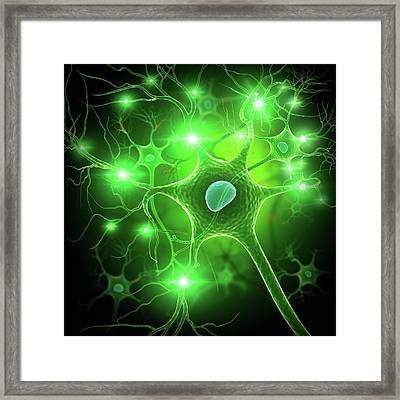 Nerve Cell Framed Print by Pixologicstudio