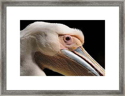 Pelican Framed Print by Marc Bittan