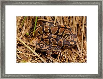 Usa, North Carolina Framed Print