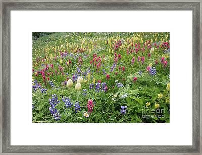 Wildflower Meadow Framed Print by Bob Gibbons