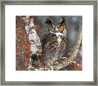 Great Horned Owl Framed Print by Cindy Lindow