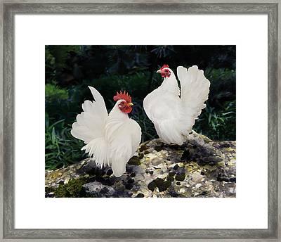 23. Pair White Serama Framed Print