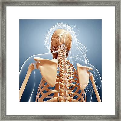 Female Skeleton Framed Print by Pixologicstudio/science Photo Library