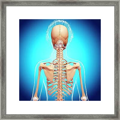 Female Skeleton Framed Print by Pixologicstudio/science Photo Library