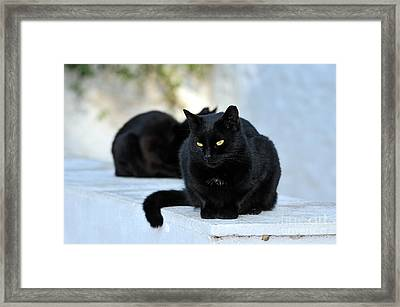 Cat In Hydra Island Framed Print by George Atsametakis