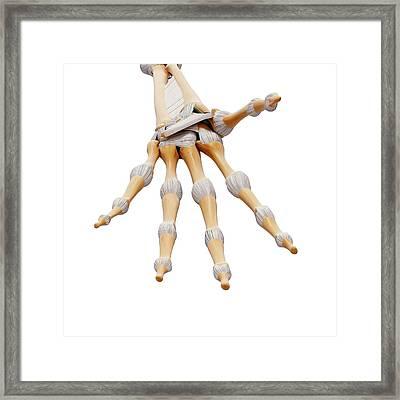 Human Hand Bones Framed Print by Pixologicstudio/science Photo Library
