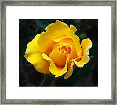 Framed Print featuring the photograph 24 Karat by Nick Kloepping