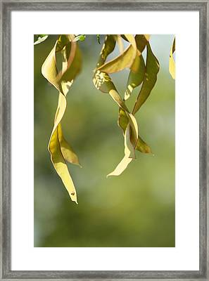 Nature Framed Print by Tinjoe Mbugus