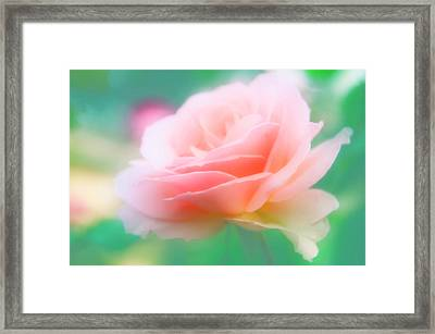 Rose (rosa Sp.) Framed Print by Maria Mosolova/science Photo Library