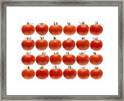 24 Tomatoes Framed Print by Steve Gadomski