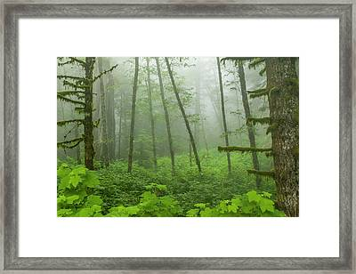 Usa, California, Redwoods National Park Framed Print by Jaynes Gallery
