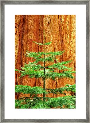 Usa, California, Yosemite National Park Framed Print