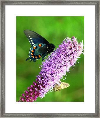 242 Butterly Framed Print