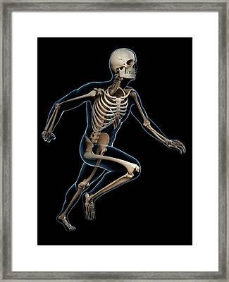 Skeletal System Of Runner Framed Print by Sebastian Kaulitzki