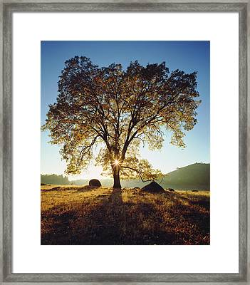 Usa, California, San Diego Framed Print