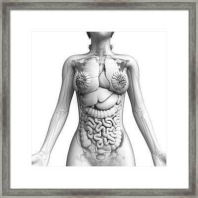 Human Digestive System Framed Print by Pixologicstudio