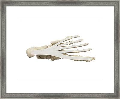 Human Foot Anatomy Framed Print by Sciepro