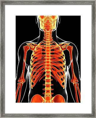 Human Skeleton Framed Print by Sebastian Kaulitzki