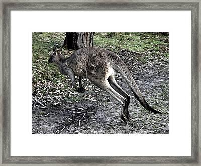 Kangaroo Framed Print by Girish J