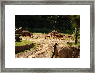 Nature Framed Print by Tinjoe Mbugus