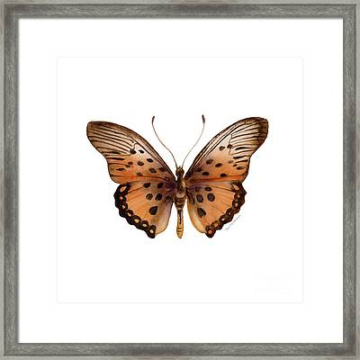 26 Trimans Butterfly Framed Print by Amy Kirkpatrick
