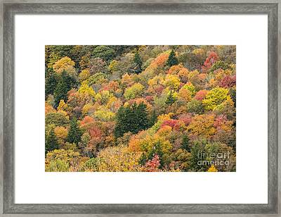 2682 Blue Ridge Parkway Framed Print