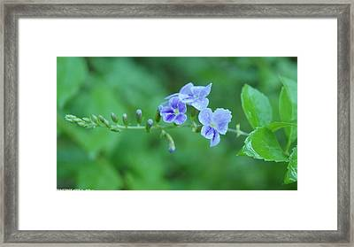 Flowers For You  Framed Print by Gornganogphatchara Kalapun