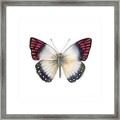 27 Magenta Tip Butterfly Framed Print by Amy Kirkpatrick