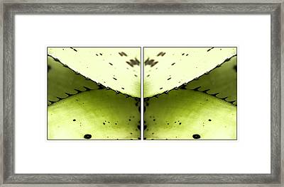 Nature Mirrors Framed Print by Marcelo Del Rei