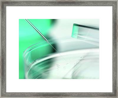 Stem Cell Research Framed Print